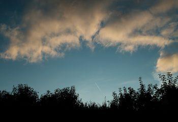 La haie et le ciel
