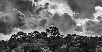 SALGADO - AMAZÔNIA
