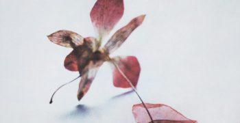 Rêve d'herbier