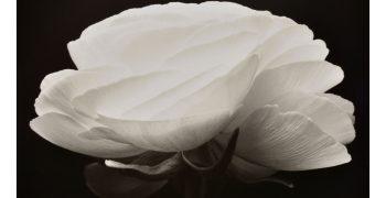 Denis Brihat - Pour l'amour des fleurs