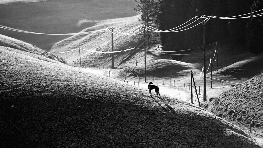 Blackdog – © Nopsir