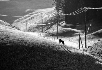Blackdog - © Nopsir