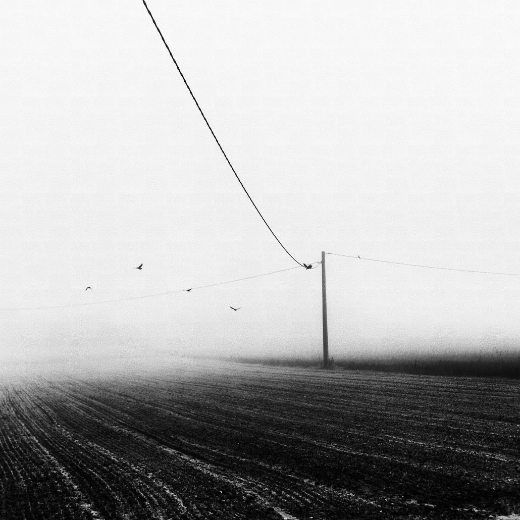 Foggybirds – © Fabien Perrot