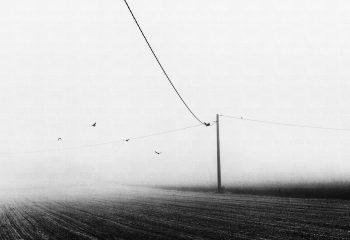 Foggybirds - © Fabien Perrot