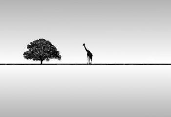 GiArbre - © José Antoine Costa