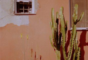 Le Mur entier est un cactus