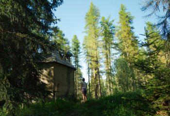 Forêt de Lauzerot.
