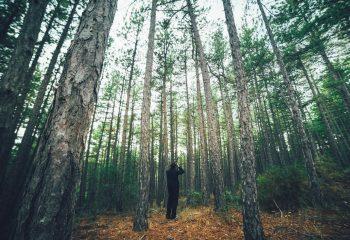 Forêt de Montdenier