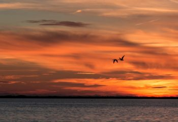 Sunset Camargue