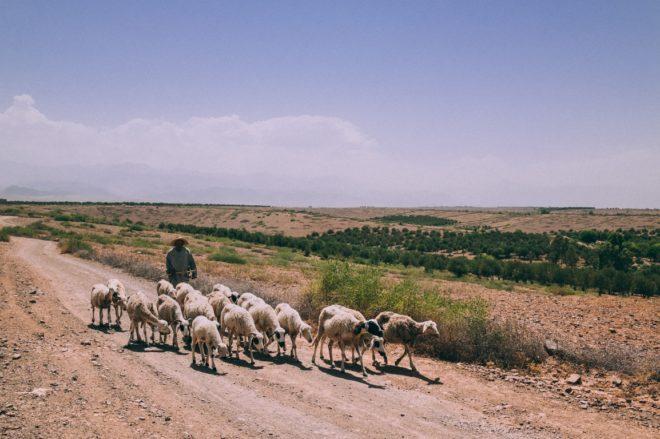 Berger (Maroc)