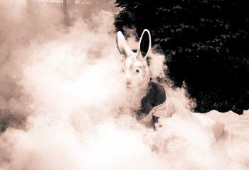 Le retour du lapin blanc