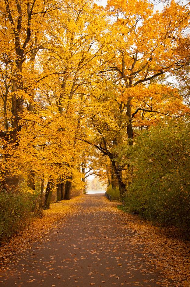 Evidence of Autumn – Genesis