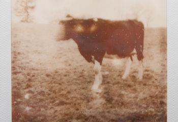 Pfff... la vache !