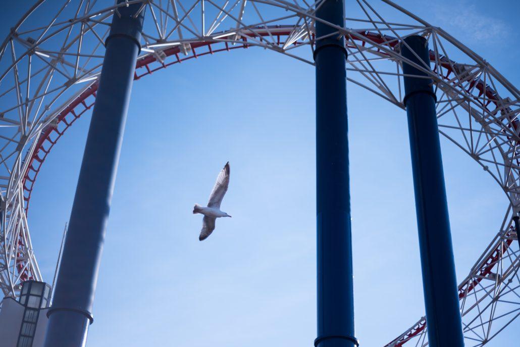 Blackpool's feathers