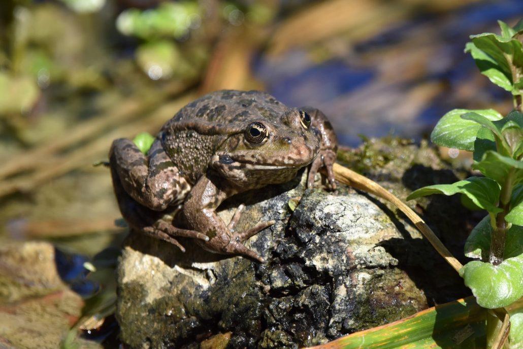 bain de soleil de la grenouille