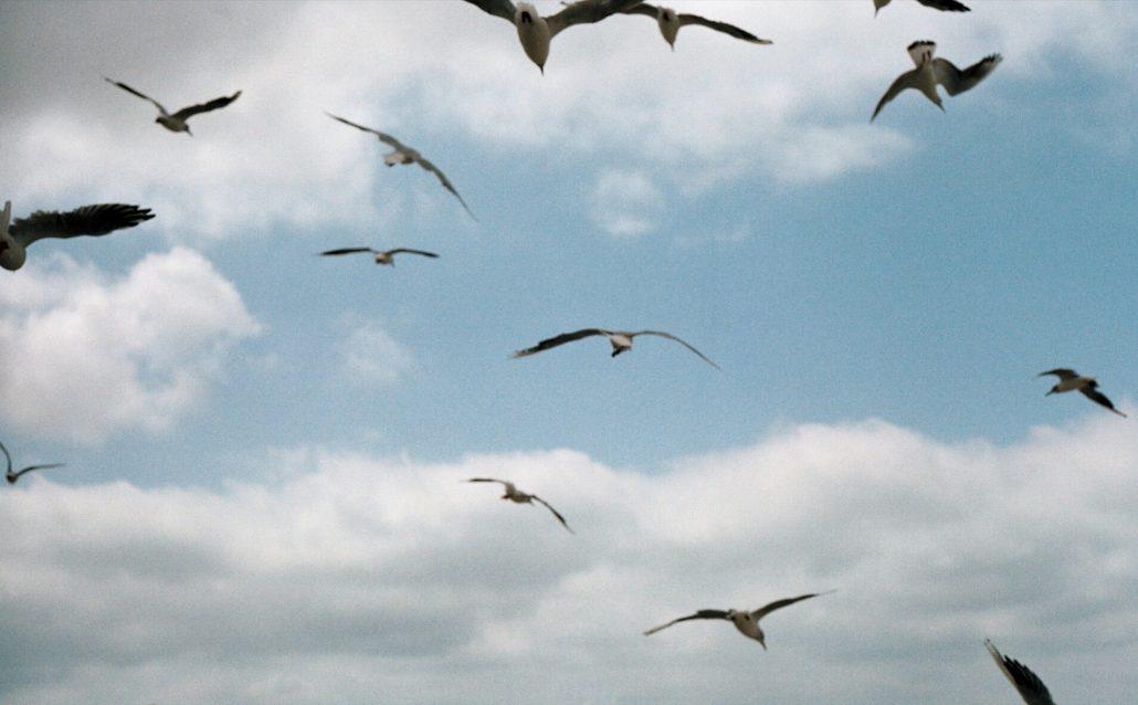 Birds, yeah.