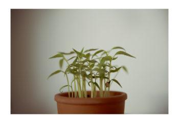 Hi Plant !