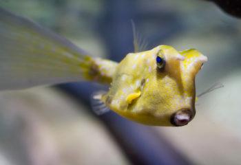 Dubai - Dubai Aquarium