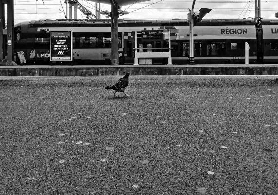 Le pigeon et le train