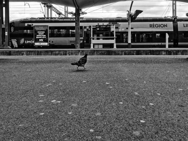 Le pigeon et le train