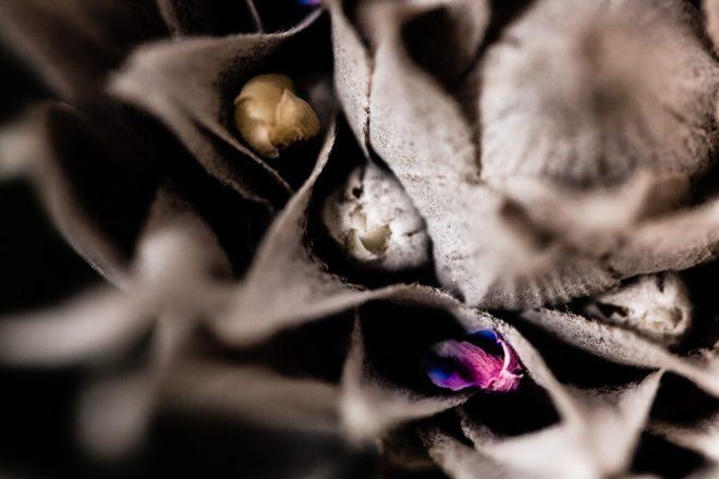 Fleur fanées #1