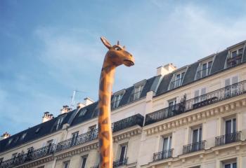 Girafe parisienne