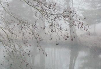 Le réveil de la rivière