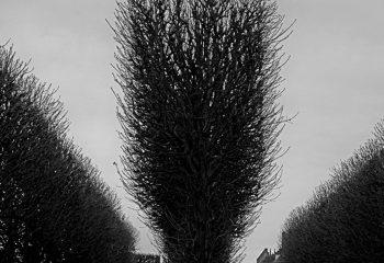 Eve tree