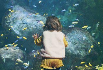 Ptit poisson deviendra grand