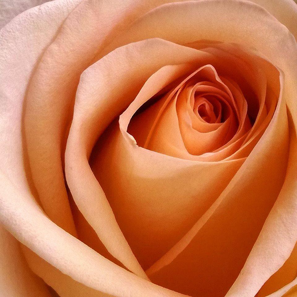 La fleur de notre amour