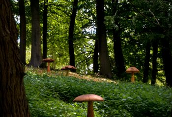 Mushrooms Forest