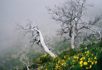 Trees suffering