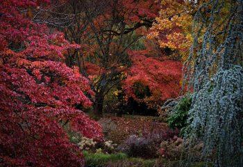 Les feux de l' automne