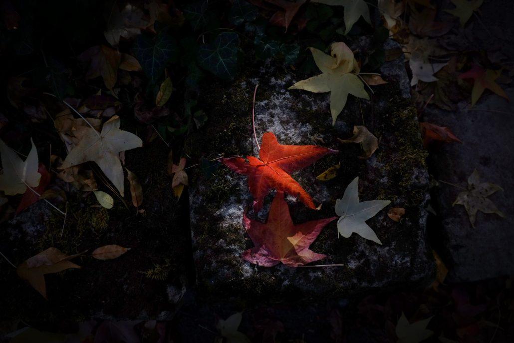 Etoiles d' automne