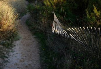 Le chemin éventail