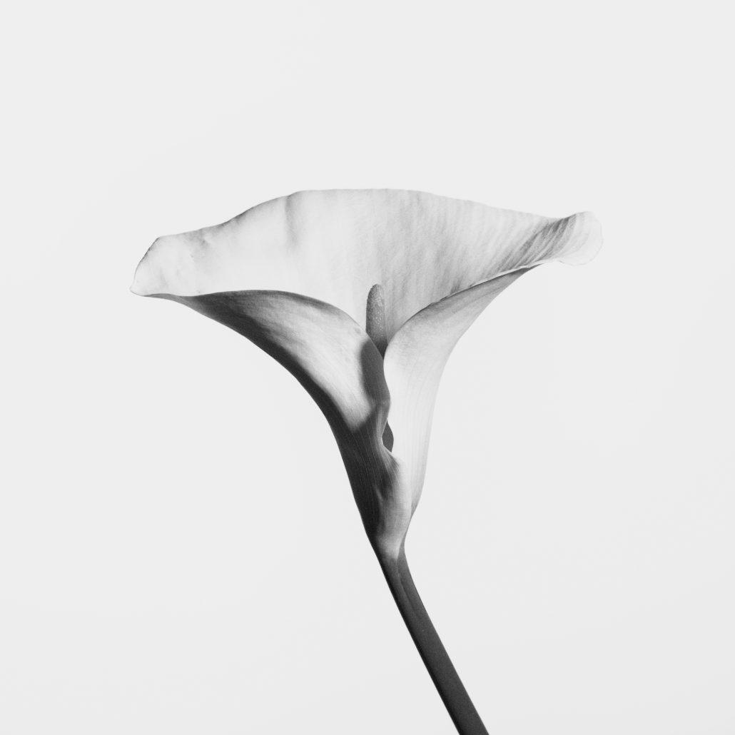 Needlove