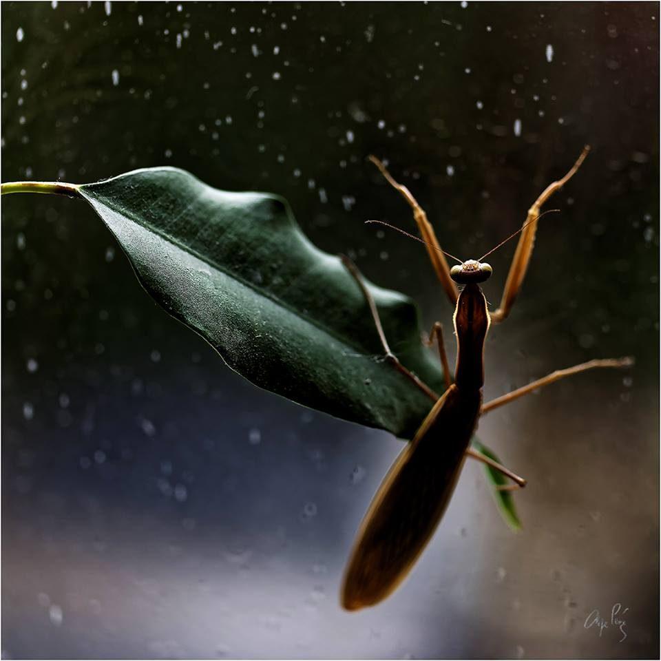 «Danse avec la pluie»