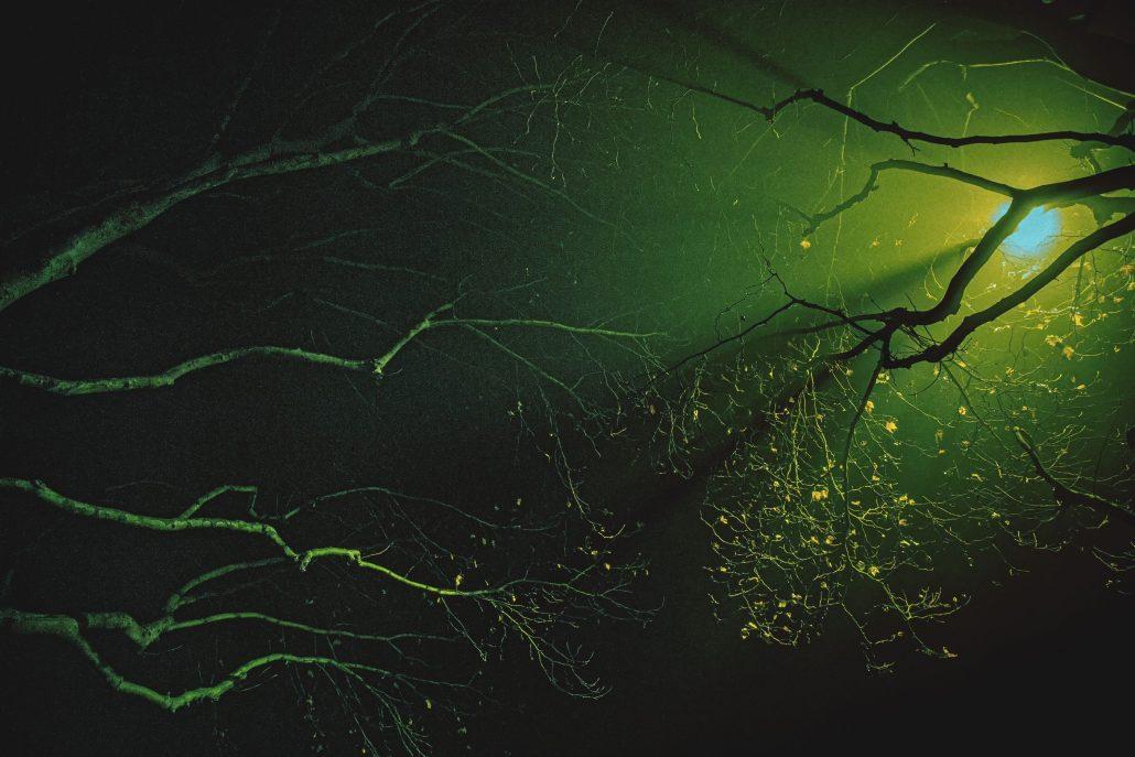 Arborescence nocture #3