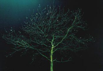 Arborescence nocture #5