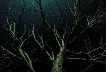 Arborescence nocture #4