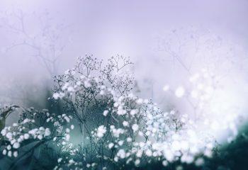 Poésie florale #2