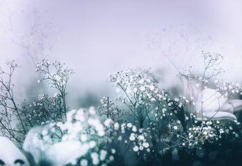 Poésie florale #3