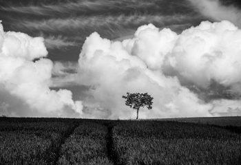 L'arbre suit sa racine