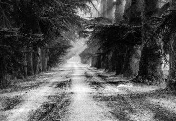 Le chemin se construit en marchant #3