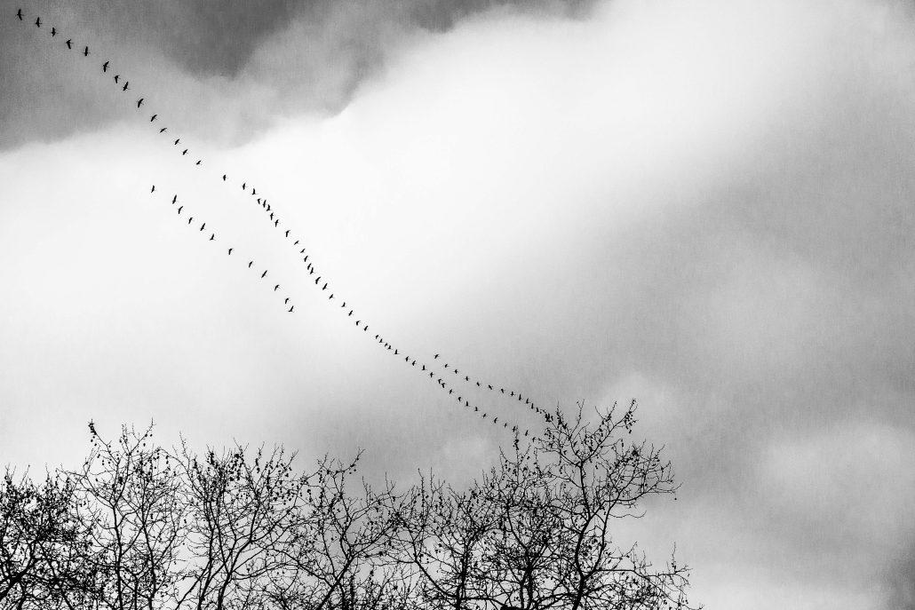 Happy Bird Day #7