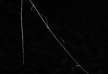 Branche illuminée