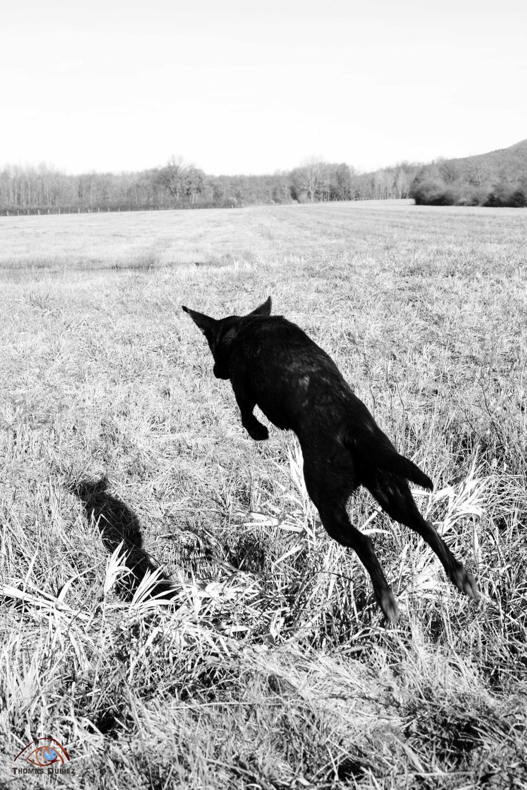 If dogs run free #68