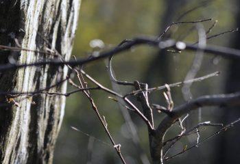 Imbroglio forestier
