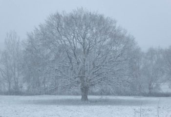 chene neige