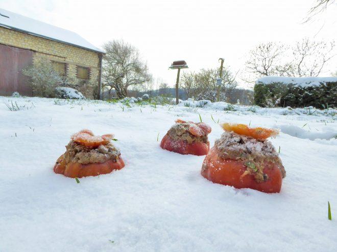 fruit de neige